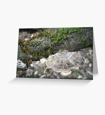 Beautiful Nature Greeting Card