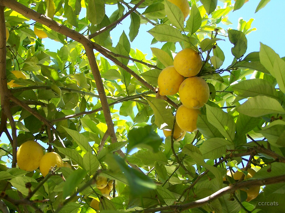 Suck a lemon. by ccrcats