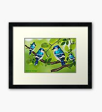 Blue jays (3711 views) Framed Print