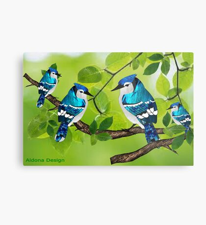 Blue jays (3755 views) Metal Print