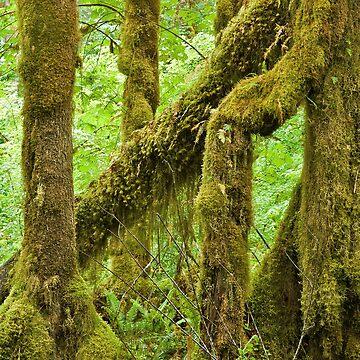 Hoh Rain Forest (9847) by blwdigital