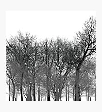 Abstract tree pattern in black Photographic Print