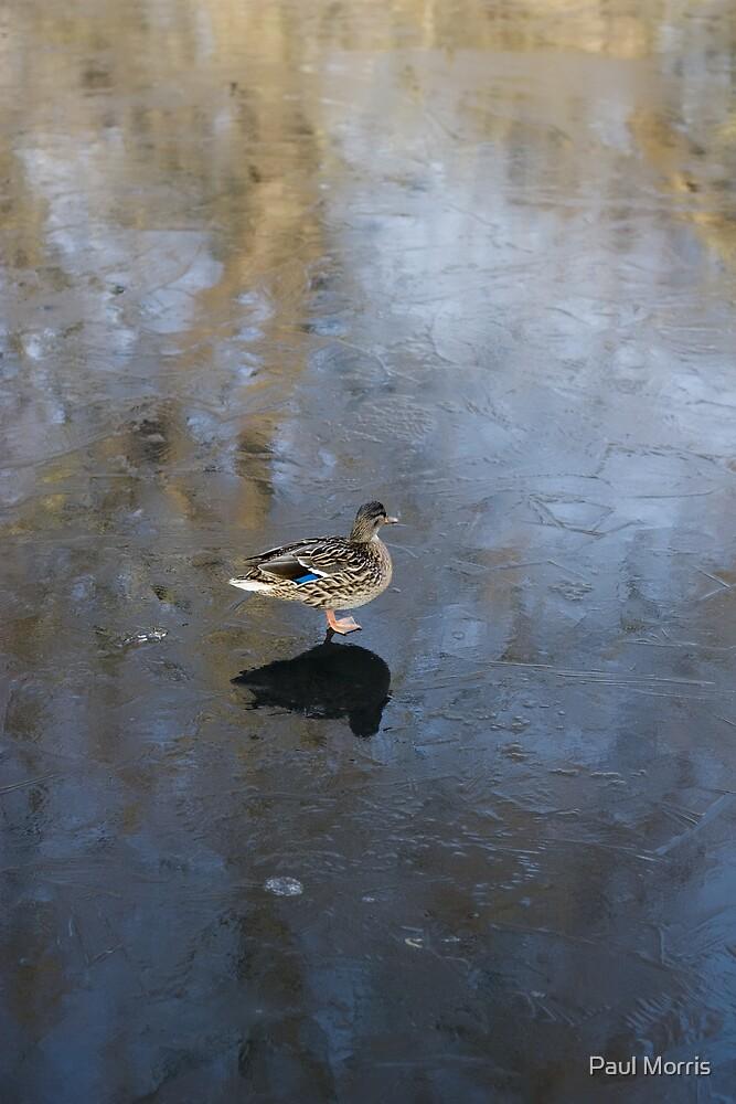 Ice Skating Duck by Paul Morris