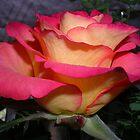 Rose On Display by lezvee