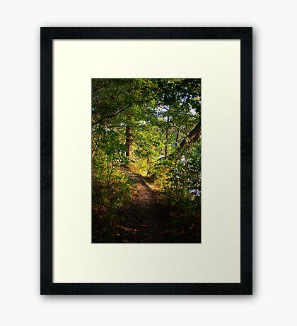 Sunlit Path. Framed Print