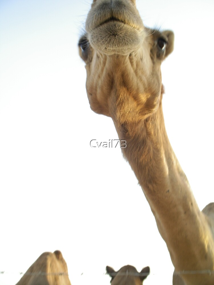 MY Camel  by Cvail73