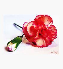 Affection Photographic Print