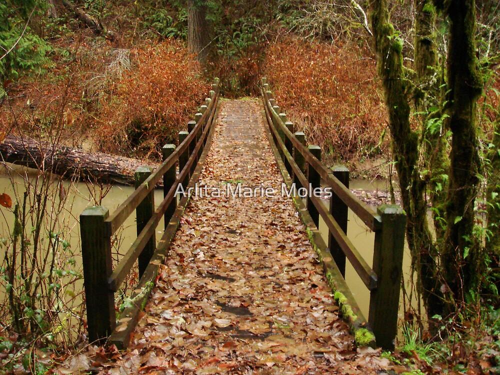 Winter Pathways by Arlita Marie Moles