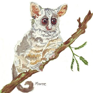 Pippin, the Bush baby by MareeClarkson