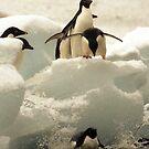 Penguin splat by Michelle Dry