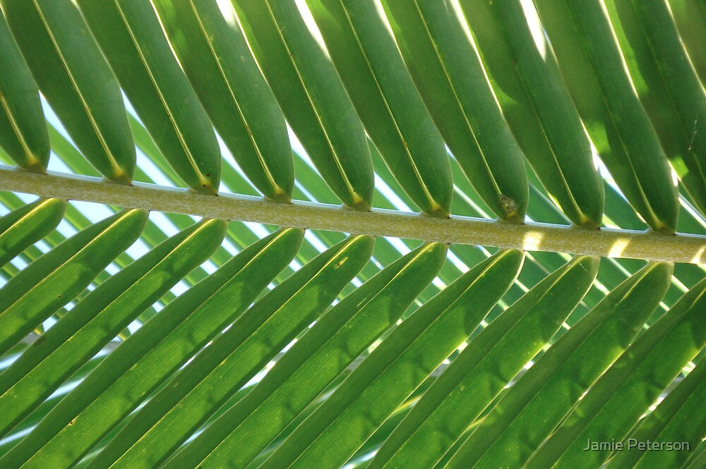 Palm Pattern by Jamie Peterson