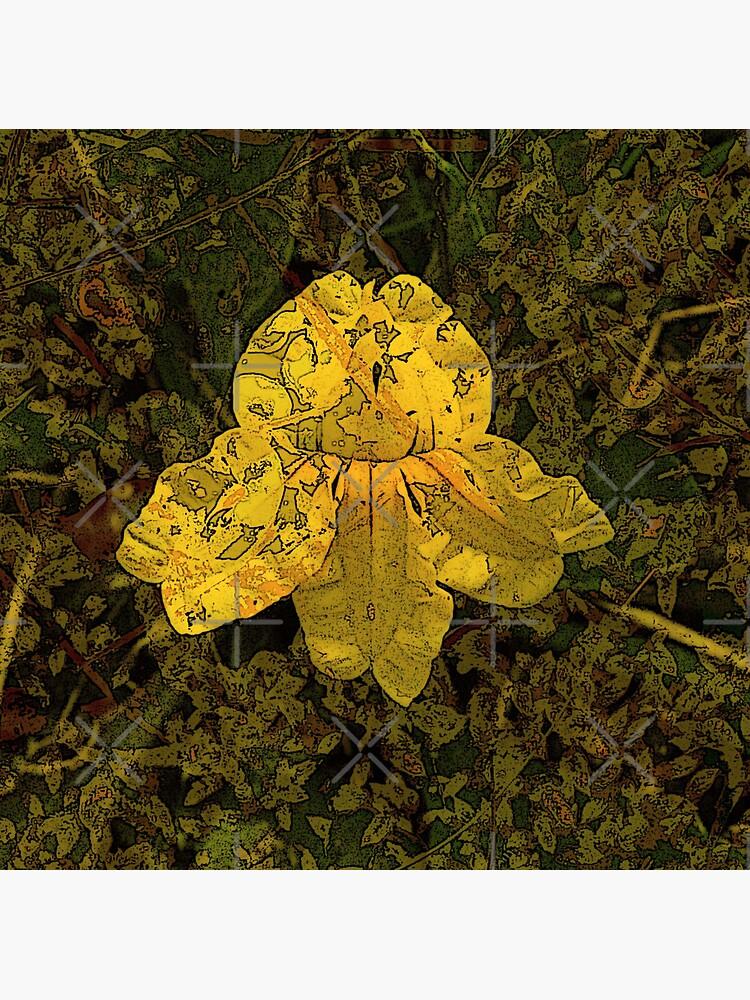 Goodenia Flower on Moss by LisaGHunter