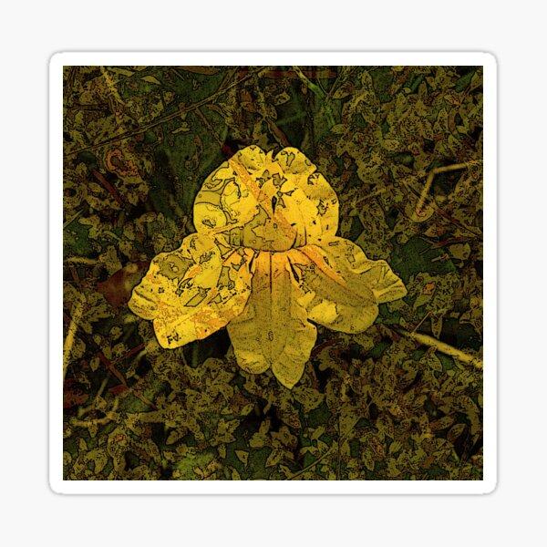 Goodenia Flower on Moss Sticker