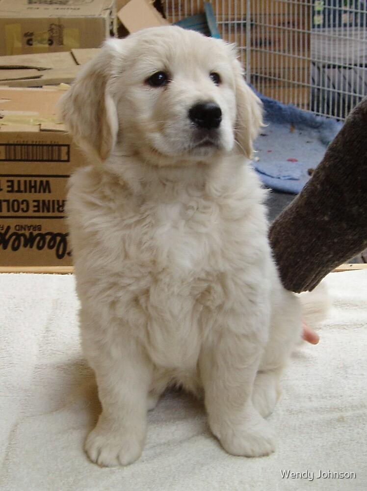Snowy Annie's puppy by Wendy Johnson