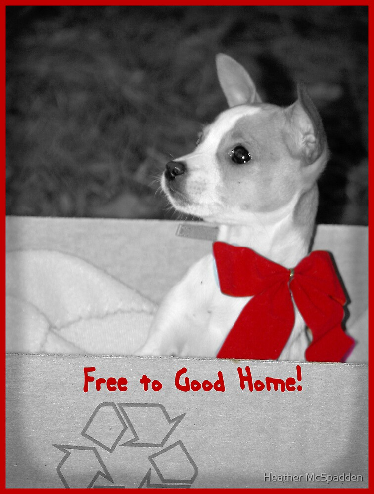 Free to Good Home! by Heather McSpadden