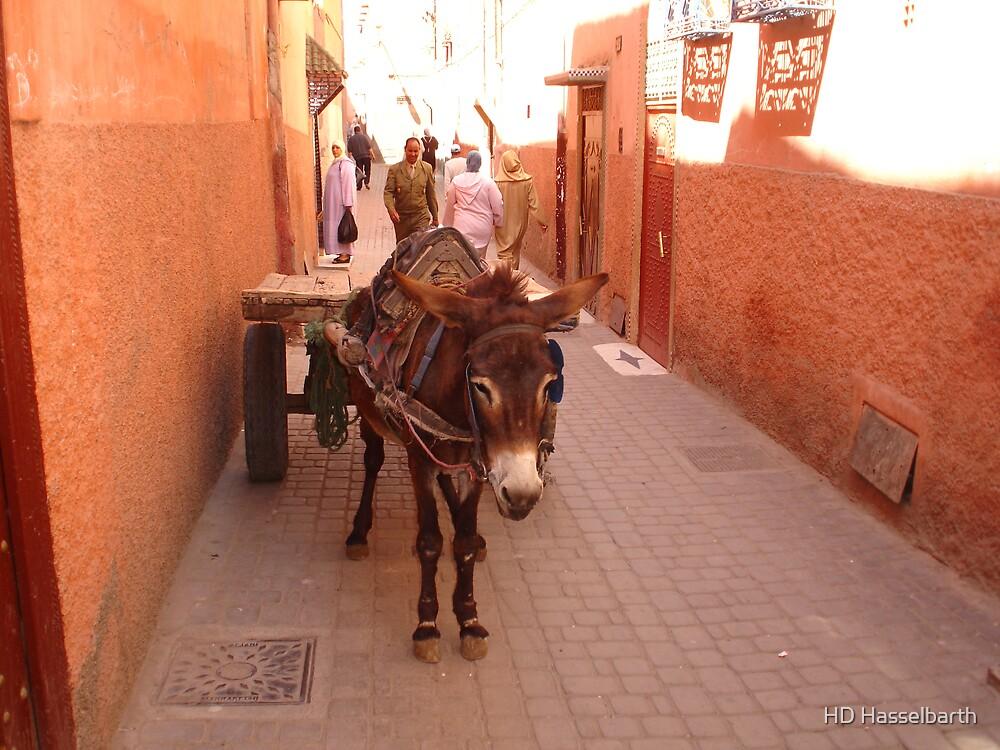 Street Donkey by HD Hasselbarth