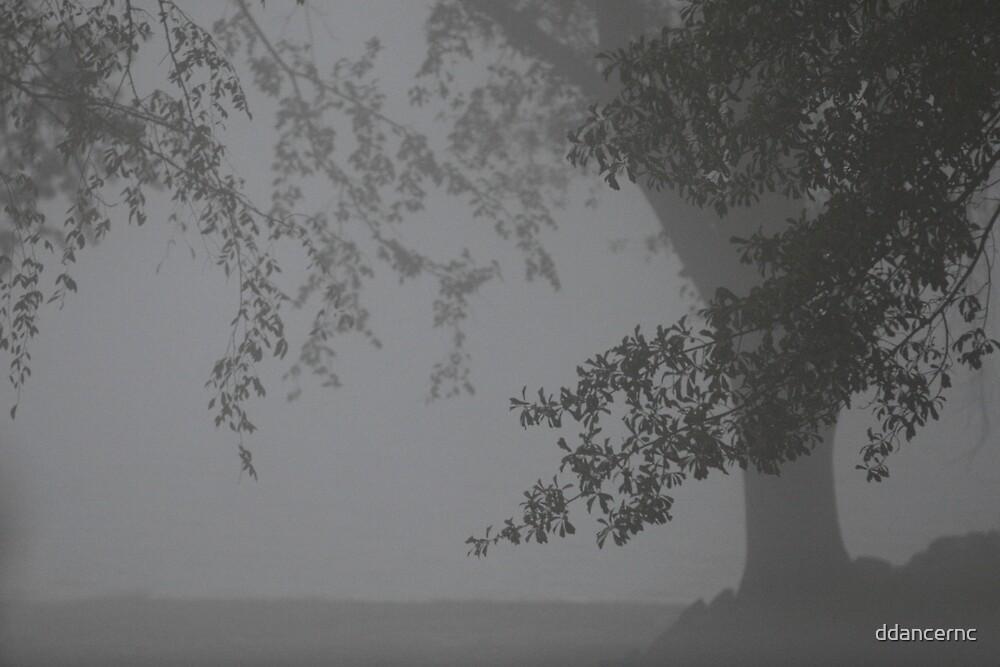 The Fog by ddancernc