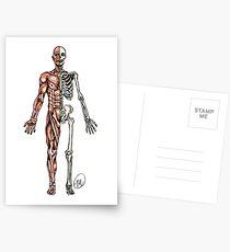 Halber Muskel - Halbes Skelett Postkarten