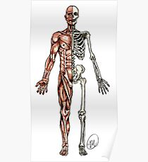 Halber Muskel - Halbes Skelett Poster