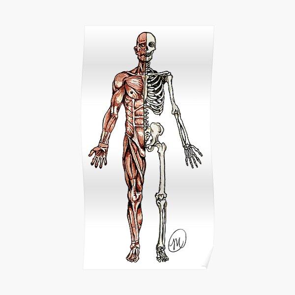 Half Muscle - Half Skeleton Poster