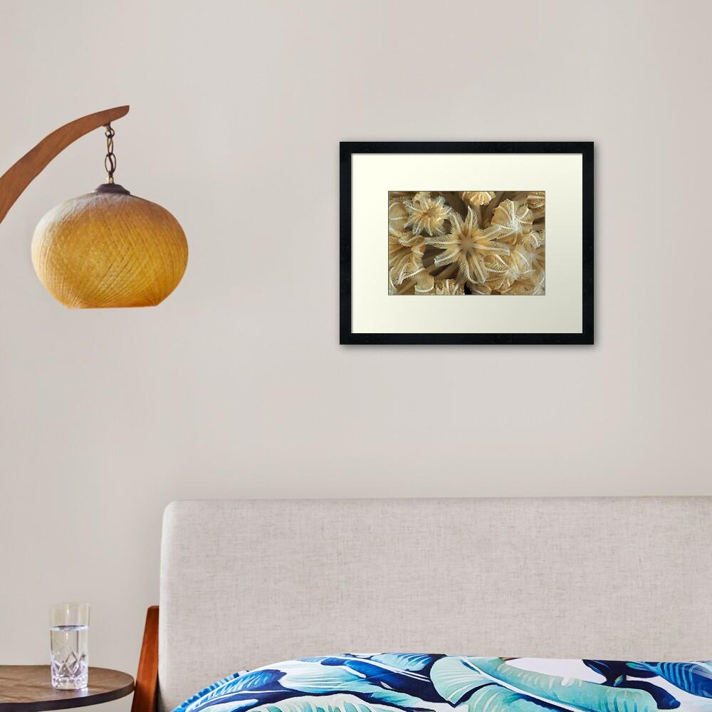 Soft coral polyps Framed Art Print