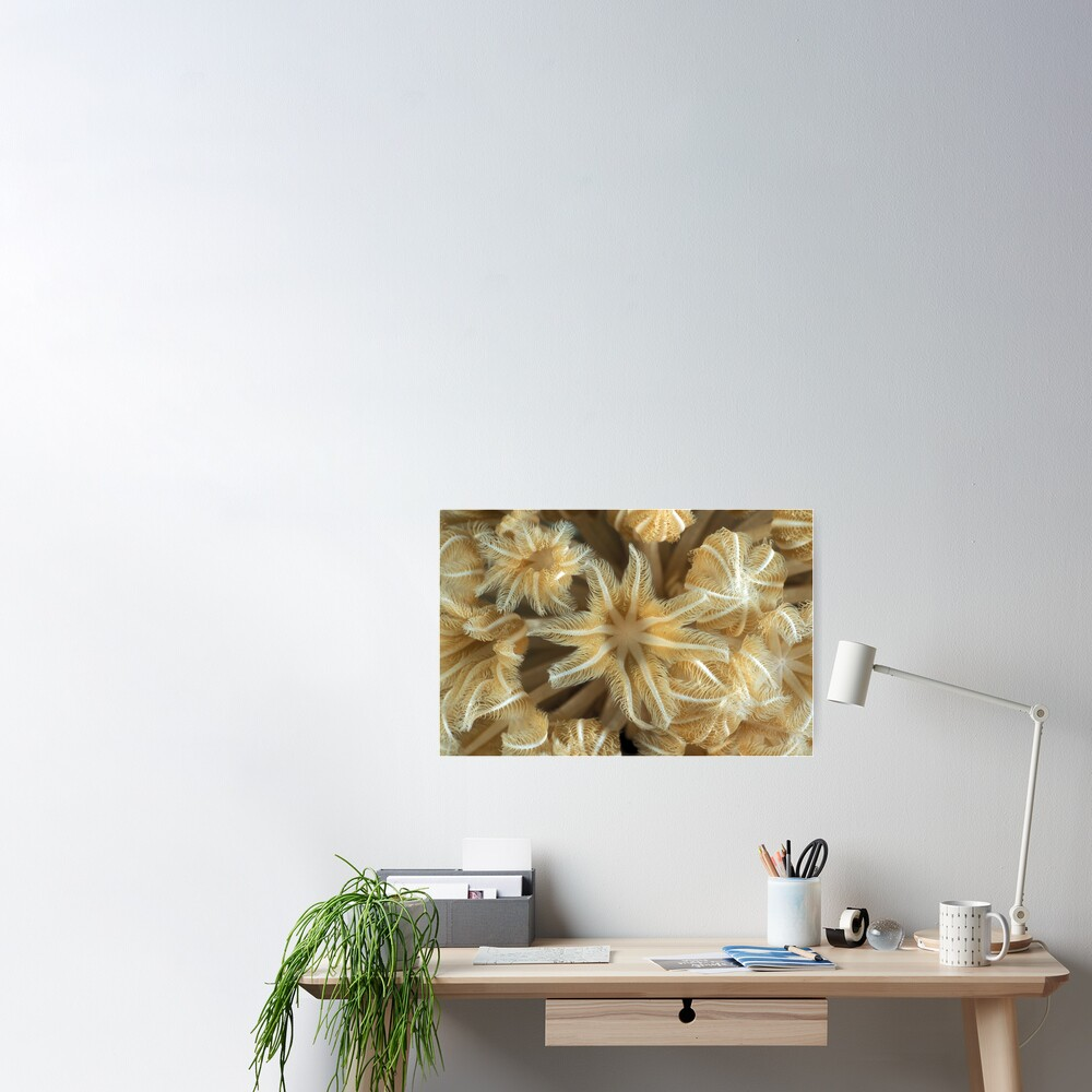 Soft coral polyps Poster