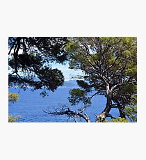 Landscape with vegetation and the blue sea. Ligure national park in Portofino, Italy. Photographic Print