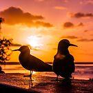 Sunset Paradise  by tracyleephoto