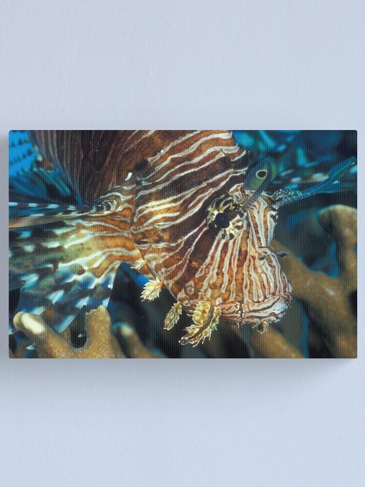 Alternate view of Lionfish Canvas Print