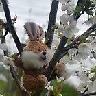 Spring Bunny......Lyme Dorset UK by lynn carter