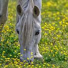 The White Horse by TJ Baccari Photography