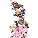 Mandarin Ducks & the Blossom by imagesower