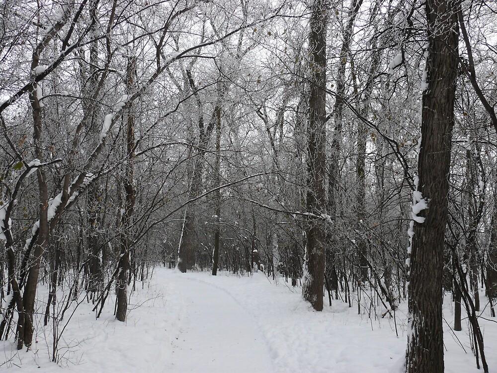 Winter Path by Geoffrey