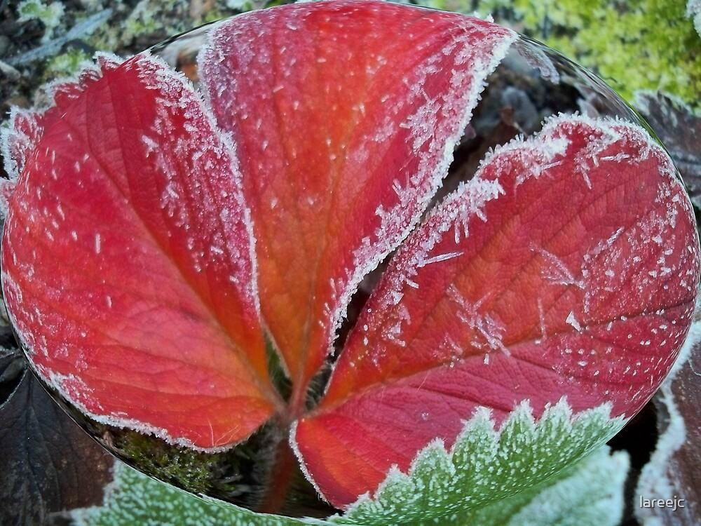 Strawberry Ice #1 by lareejc