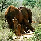 Elephant itch. by Michelle Dry