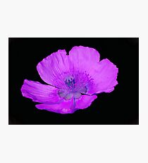 isolated poppy in the garden Photographic Print