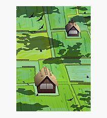 Rice paddy field Photographic Print