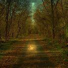 Moonlight Walk by Robert Burns Miller
