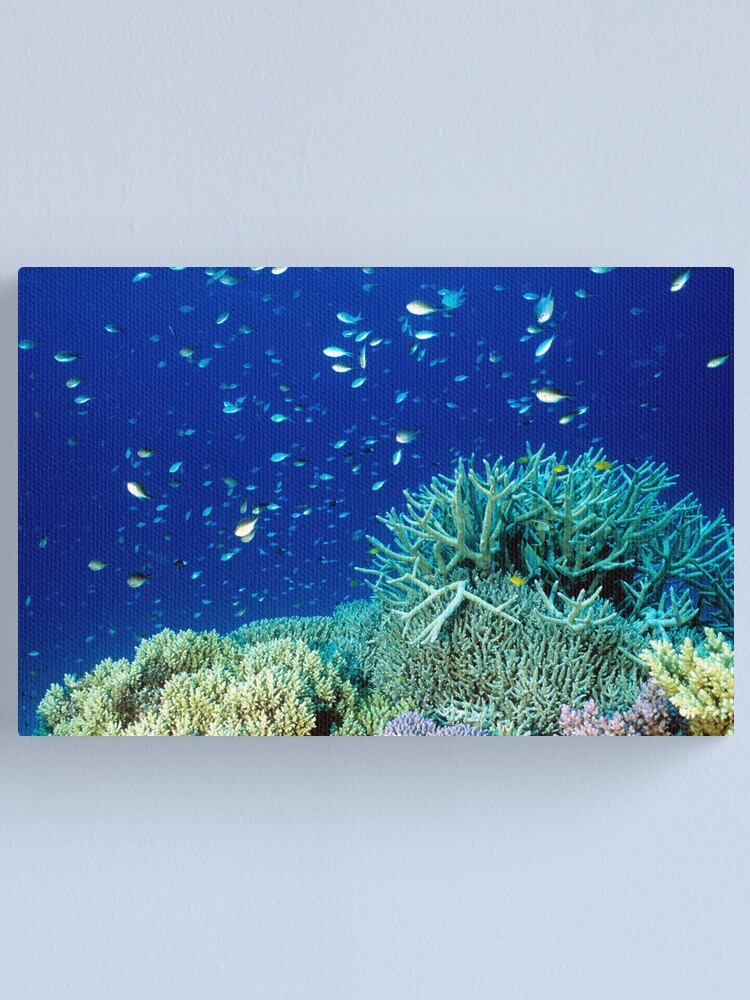 Alternate view of Coral reef scene Canvas Print
