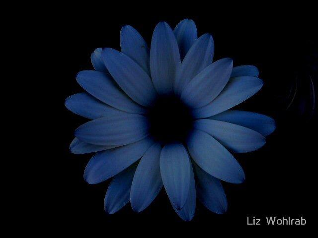Dark Nights by Liz  Wohlrab