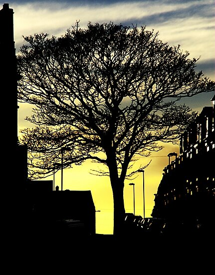 Urban Tree by Andrew Pounder