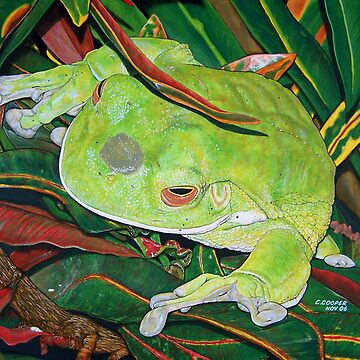 Frog in the Bush by ChrisCooper