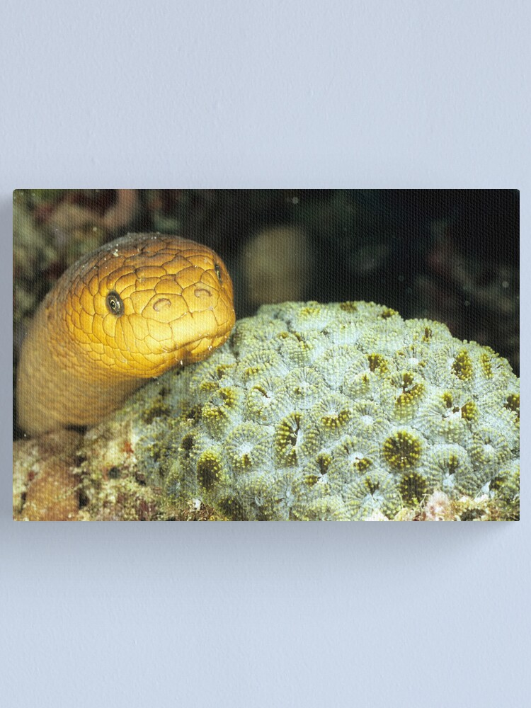 Alternate view of Olive sea snake Canvas Print