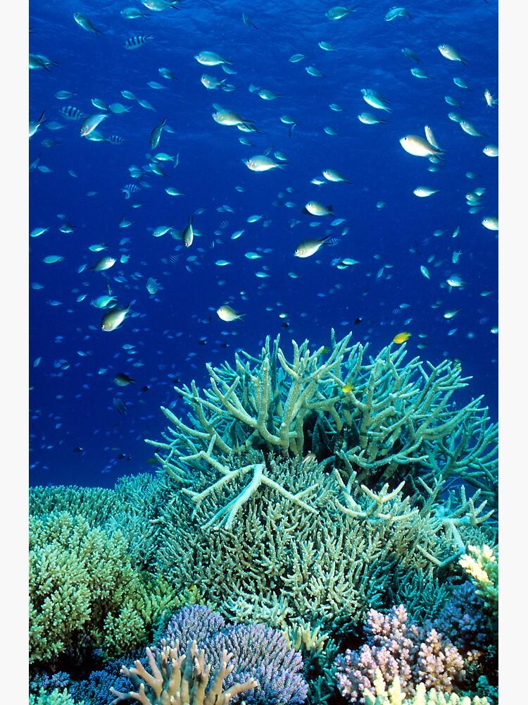Coral reef scene by DavidWachenfeld