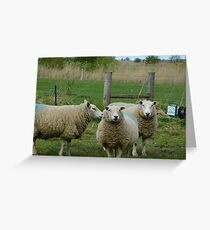 Three Sheep Greeting Card