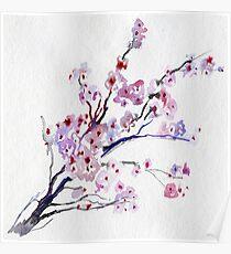 Cherry blossom on white Poster
