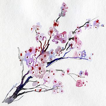 Cherry blossom on white by love999