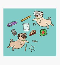 STEM Pugs Photographic Print