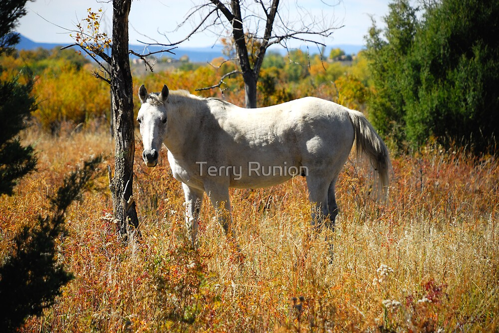 Horse by Terry Runion