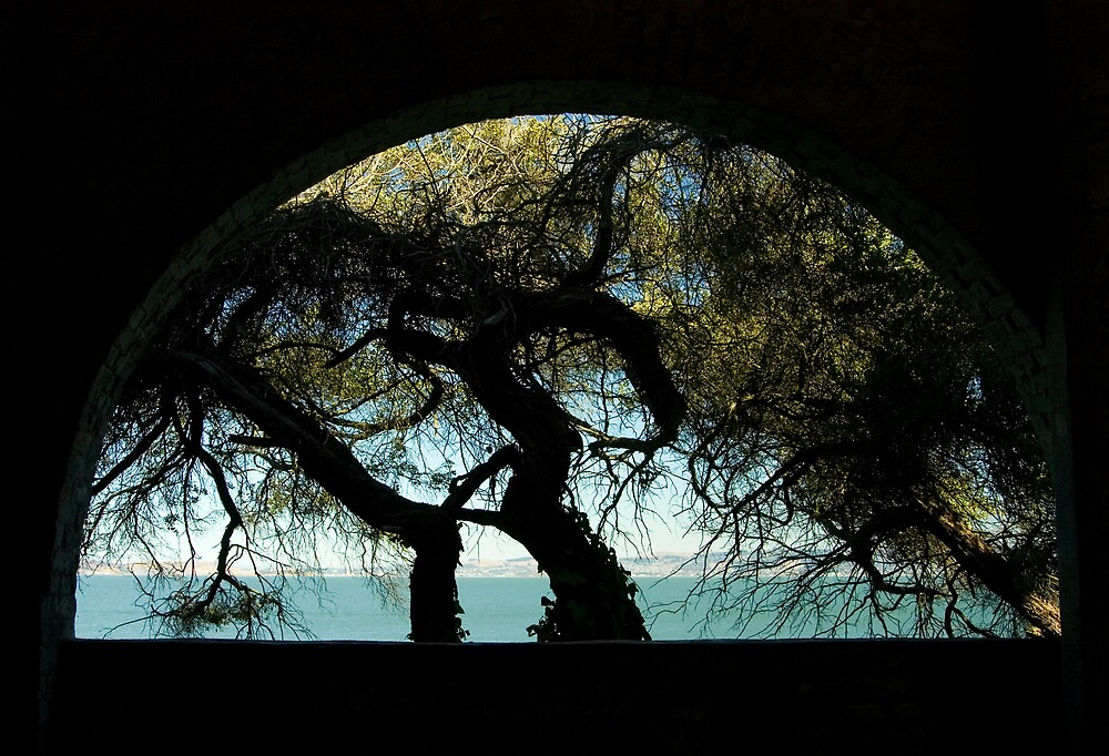 Arch View by Norbert Rehm